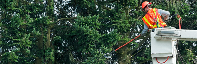Arborist  trimming a tree branch close to a powerline